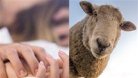 啪啪,羊,咩咩叫,隔壁,隔音(翻攝自Pixabay)