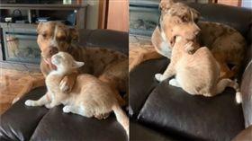 狗狗舔貓毛。(圖/翻攝自Jami Michelle fb)