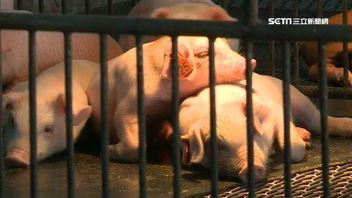中國,冷凍豬肉,穩豬價,文件,發布數次(圖/資料照)