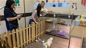 基隆市,寵物店,評鑑,動物保護防疫所,進步(圖/基隆市動物保護防疫所提供)中央社