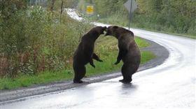加拿大,灰熊。(圖/翻攝自Cari McGillivray臉書)