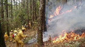 森林內未經許可不得引火 違者最高可罰