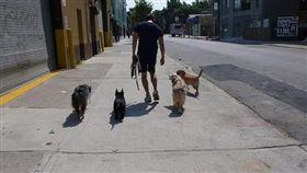美國,紐約,曼哈頓,遛狗,訓練師。(圖/翻攝自ryanfordogs)