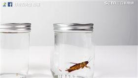 蟑螂在水中便便。(圖/好奇五先生臉書授權)