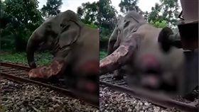 火車,大象,鐵軌,撞擊(翻攝自微博)
