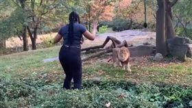 美國一名非裔女子闖入紐約布朗布朗克斯動物園獅子區,對一頭公獅跳舞挑釁。(圖/翻攝自Real Sobrino YouTube)