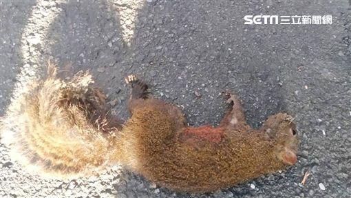 台北市萬華區艋舺大道巷內發生變電箱爆炸事件,警消調查後發現竟是松鼠釀禍(翻攝畫面)