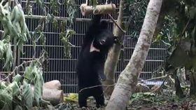 利稻小熊,臺東林管處提供