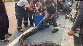 澄清湖,蟒蛇,棄養,消防員(翻攝自台灣新聞記者聯盟資訊平台)