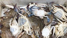 馬祖,入秋季節,定置網,最佳捕魚時機,收獲滿滿(圖/北竿漁民提供)中央社