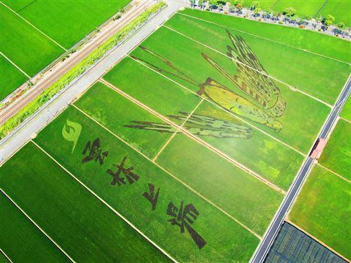 雲林縣,雙十國慶,與偶同行,看彩繪田,看布袋戲(圖/斗南鎮農會提供)中央社
