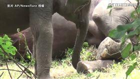 ▲在印度斯里蘭卡的一座小村莊,森林裡接連兩天發現好幾頭死去的大象......(圖/AP/Newsflare 授權)