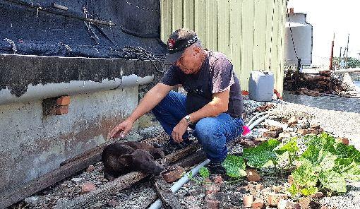 流浪犬遭捕獸夾夾住(2)高雄興達港附近一隻黑色流浪犬遭捕獸夾夾住,台灣動物緊急救援小組5日前往發現,傷犬左前腳掌遭捕獸夾緊扣,先於現場拆除獸夾後,再後送至市區的動物醫院急救。(台灣動物緊急救援小組提供)中央社記者陳朝福傳真  108年10月5日