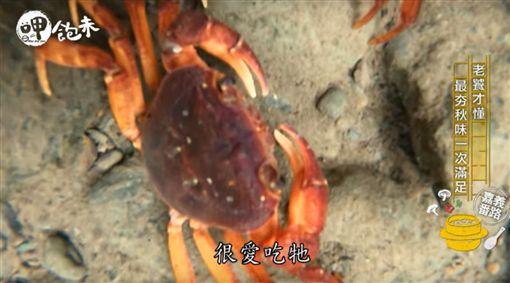 【呷飽未】阿里山無奇不有 美食呷到秋眯眯 (節目截圖)