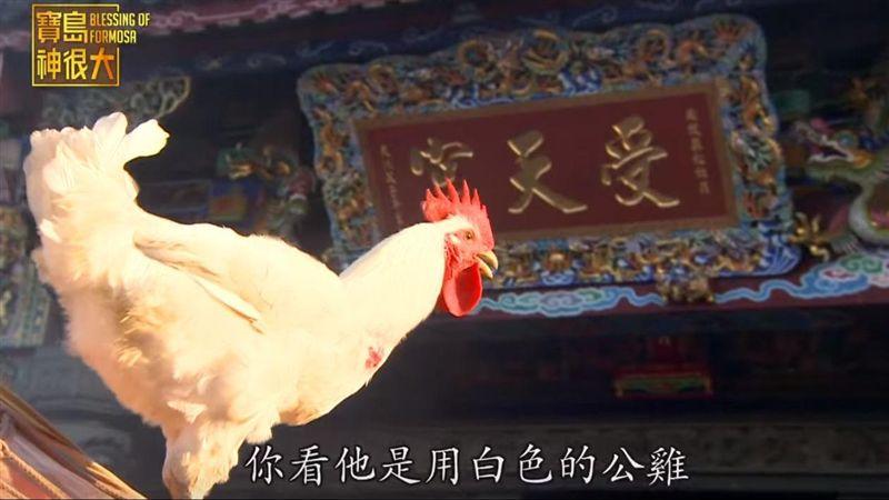 靈鳥「白鳳」謝平安踅庄 避邪擋陰煞