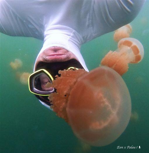 圖/勿用!!!!!!!!陳耀恩,Ean Chen,上帝的水族箱,帛琉,熱帶魚,珊瑚,潛水