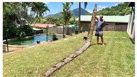 有民眾在凱恩斯(Cairns)的郊區小溪附近發現了一條「7公尺長」的蛇皮,原以為是動物脫皮的自然現象,但仔細觀察才發現「居然是被人強剝的!」據蛇類專家表示,這品種可能是原產於東南亞的「網紋蟒」。(圖/翻攝自ABC News)