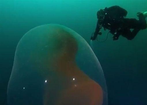 挪威,海底,魷魚,卵囊,潛水,生物https://www.youtube.com/watch?v=wJMHsi0HBUo