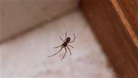 蜘蛛 https://www.flickr.com/photos/jcapaldi/9734283368/in/photolist-fQbKiS-gdTfuT-pY5Gw-6NbyhE-adW4jj-d6rtP1-aaspmZ-eaj5Jv-asU4Jk-cB66cG-dixRvR-62QhQn-SiTu8p-gdTfZj-9XLv5Y-TV3hQK-zkm3M6-28wsfrU-a6hq13-d