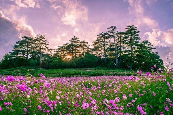 來一趟「台灣小瑞士」福壽山農場 花海、楓紅一次滿足!