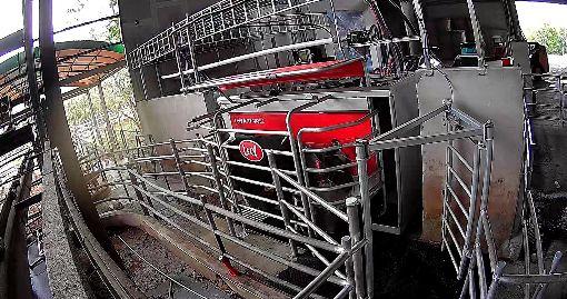 開放外勞救急 傳統農業終需轉型(2)農業外勞今年開放,農委會統計,累計至9月底止,酪農業申請為115件115人。農委會表示,未來農業還是要朝向機械化、自動化發展,節省人力需求,才是長遠之計。圖為自動化搾乳機器人。(農委會畜牧處提供)中央社記者楊淑閔傳真 108年10月11日