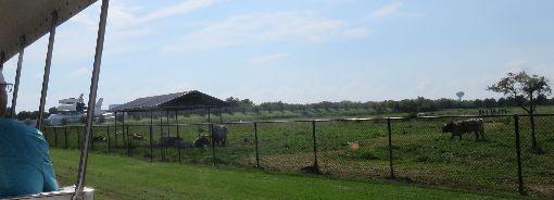 休士頓太空中心目睹太空梭 還可見牛群吃草休士頓太空中心是探索太空知識的最理想地點,除可親眼目睹實體太空梭外,還可見到牛群吃草。中央社記者汪淑芬攝 108年10月11日