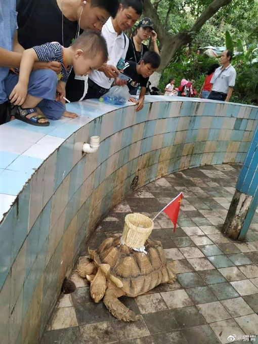中國大陸,南寧動物園,象龜(圖/翻攝自Tea-tia微博)