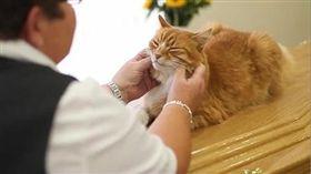 英國貓咪變葬禮師,擁有第六感又能準時出席,非常可愛。(圖/翻攝自Tyla臉書)