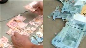 白蟻,馬來西亞,鈔票,家,啃食,食物,損毀,喚回,破爛,銀行,私房錢, 圖/翻攝自臉書