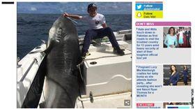 澳洲,雪梨,虎鯊,世界紀錄。(圖/翻攝自dailymail)