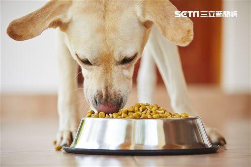 美國寵物食品掃貨月(業配勿用)