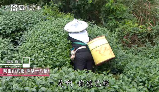 在台灣的故事 - 阿里山採茶女飆仔 高山中的一群採茶姐姐(節目截圖)
