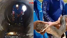 泰住宅區驚見逾4公尺眼鏡王蛇 重達15公斤 圖翻攝自臉書