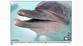 動物表演始終是備受爭議的議題,許多不肖商人為了向消費者兜售「新奇表演」,無視動物權,在訓練過程中用盡「違反動物天性」的手段,達成吸睛的目的,過去也曾發生多起動物被虐致死的悲劇。印尼峇厘島一間飯店日前遭保育團體踢爆「囚禁海豚」,因長期被困在含氯的泳池,導致海豚雙眼失明,甚至出現精神異常。(圖/翻攝自Daily Mail Online)