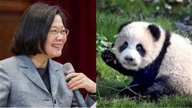 國台辦今日批評「芒果乾」,引來台灣網友熱議。(組合圖/資料照)