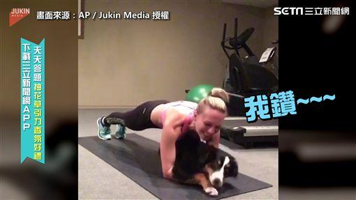 ▲狗狗嘗試鑽進在做棒式訓練的主人肚下(圖/AP/Jukin Media 授權)