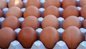 雞蛋(圖/翻攝自pixabay)