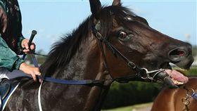 澳洲廣播公司17日揭露澳洲每年有數以千計的退休賽馬遭非人道方式屠宰,屠體則供人類或動物食用,給澳洲高人氣、高利潤的賽馬業投下震撼彈。(圖/翻攝自賽馬保護聯盟網頁horseracingkills.com)