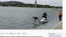 日前澳洲發生了一件讓人哭笑不得的趣事!澳洲的坎培拉市警方於16日接獲民眾報案,民眾表示,在伯里格里芬湖(Lake Burley Griffin)中,有隻袋鼠疑似失足掉到湖裡,並在水中載浮載沉,民眾不知道牠是否溺水,因此向警方報案,只不過當警方到場,將袋鼠救援上岸時,只見袋鼠似乎不願被拯救,還想繼續玩水,牠轉身再度跳回湖中,逗趣畫面被民眾拍下,讓人哭笑不得!(圖/翻攝自ABCNEWS)