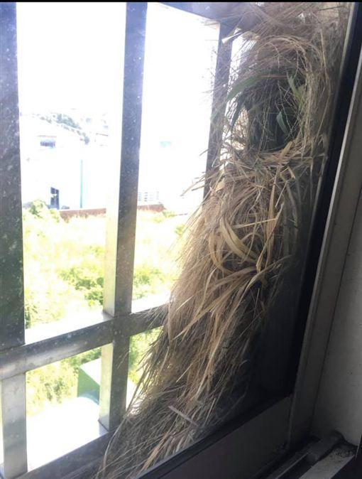 窗台塞爆「4顆鳥巢」!她驚:才升官加薪…網狂讚風水太好(圖/翻攝自爆廢公社)