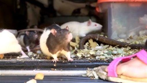 寵物,倉鼠,繁殖,崩潰,啪啪,亂倫,貨車,美國,聖地亞哥,交配 圖/翻攝自YouTube