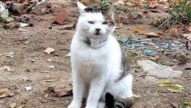 貓,GPS,路線圖,爆笑公社 圖/翻攝自臉書爆笑公社