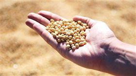 消息人士說,北京當局向國內外主要大豆加工業者提供豁免,免除進口美國大豆的高額關稅,額度高達1000萬公噸。(示意圖/圖取自Pixabay圖庫)