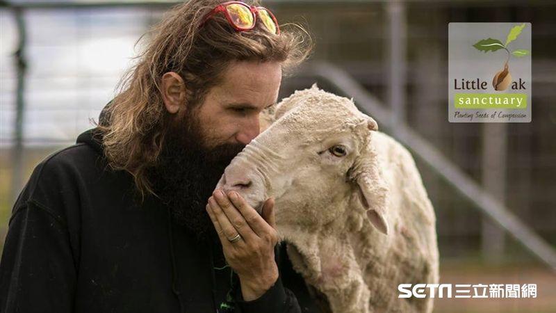 十歲澳洲綿羊明星「克里斯」辭世 羊毛重量曾創世界紀錄