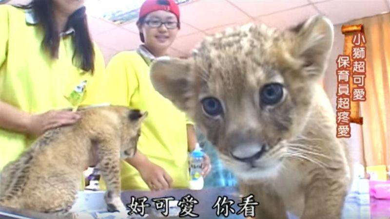 「壽山動物園」用愛心與動物共處的人們 一日動物園員工!