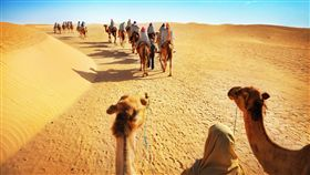 ▲撒哈拉沙漠騎駱駝(圖/shutterstock.com)