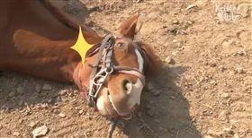 耍賴,馬,懶惰(圖/翻攝自Frasisco Zalasar FB)