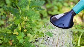 主管,菜鳥,澆水,職場(翻攝自Pixabay)