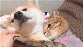 貓與狗。(圖/翻攝自@halu4809 IG)