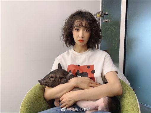 宋茜/微博